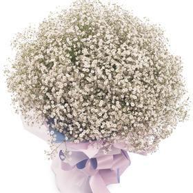 안개꽃다발